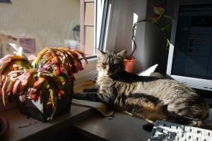 Im Frühling kehren die Katzen an die sonnigen Arbeitsplätze zurück.
